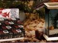 1990-le-petit-poisson.
